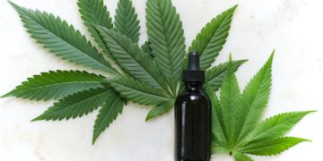 Cáñamo ¿Un nuevo variante del cannabis?